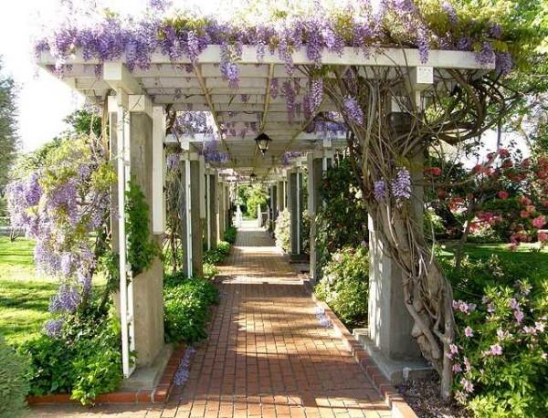 Пергола: виды, названия и фото, строительство своими руками для дачи и сада
