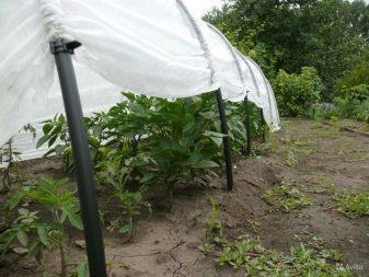 Укрывной материал для парников и теплиц: оптимальный микроклимат для урожая