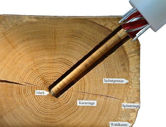 Коронка по дереву: виды, размеры и ТОП производителей